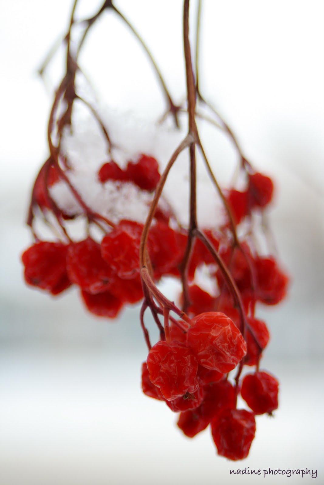 [berry+2]