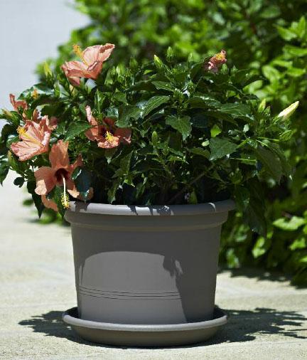 Verde progetto la scelta dei vasi for Vasi design economici