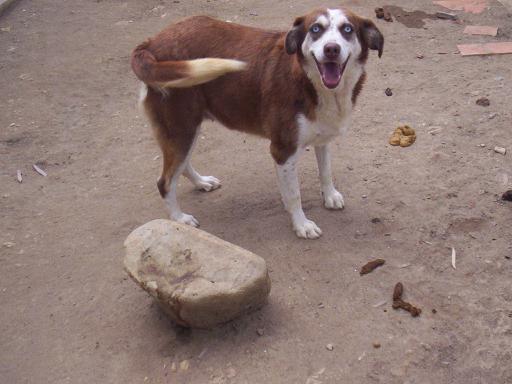 KIRA adoptada en octubre 2008!!