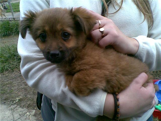 TaTi, adoptada el 20 de febrero 2009!