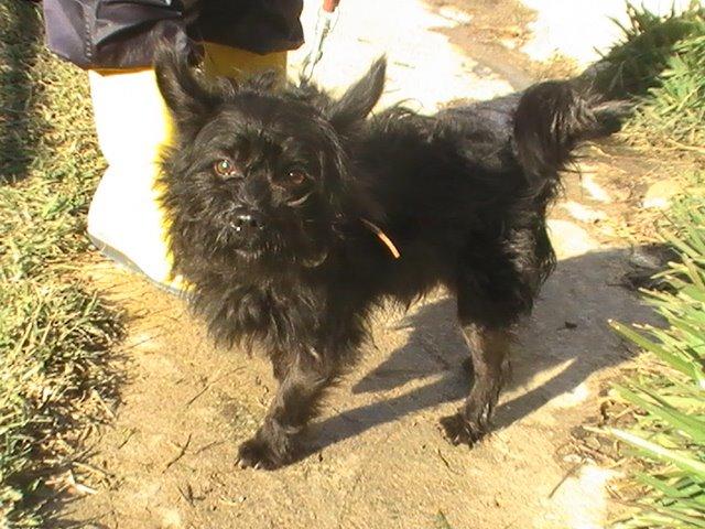 Jaky adoptado en Marzo 09!