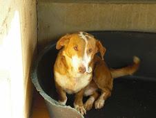 Cooper adoptado junto con Turco!!