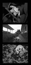 Sesion de fotos para Pupy! ja!