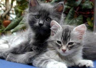[post[1].pisicicats]