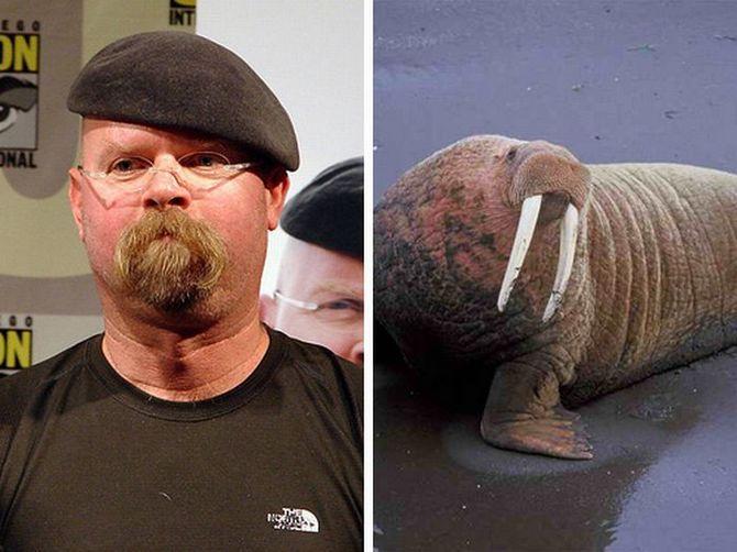 Celebrities that look like animals celebrities that look like animals