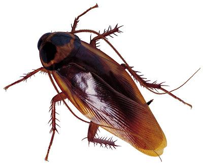 Serangga Yang Dibenci Tapi Bermanfaat