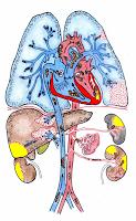артериална емболия