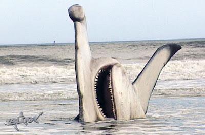 Tiburón martillo varado en la playa