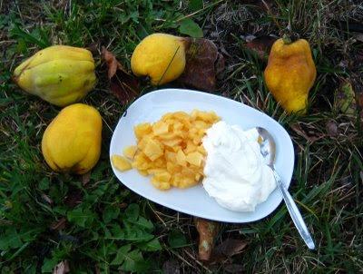 Quitten-Dessert mit Sahne