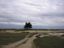Coutainville  Les dunes
