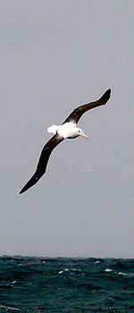 Albatrus η Μεγάλη Πτήση(Φυγή)