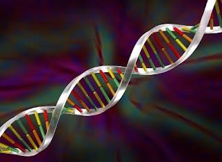 Proyecto genoma humano mayo 2010 for En 2003 se completo la secuenciacion del humano