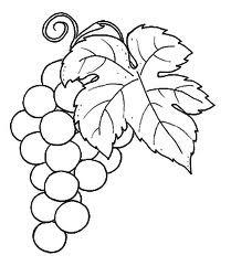 Boa uva