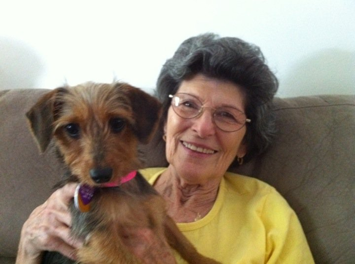 new rescue puppy a 1 year old dachshund yorkie mix sugar baby oh
