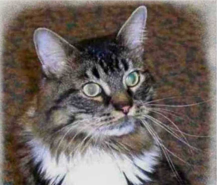 Popular Names For Maine Coon Cats