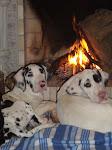 Cães Oxemberg