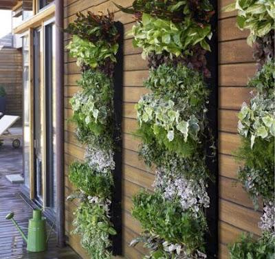 Gardenpatio on Patio Gardens And Whatever S Next
