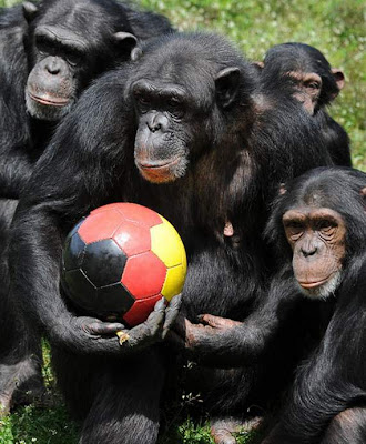 animals also play football01