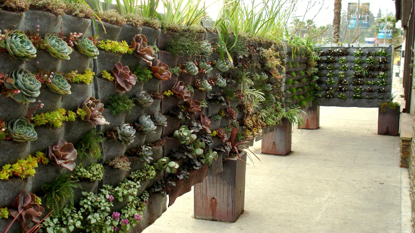 Plants on walls vertical garden systems raphael on ventura for Plante grasse exterieur