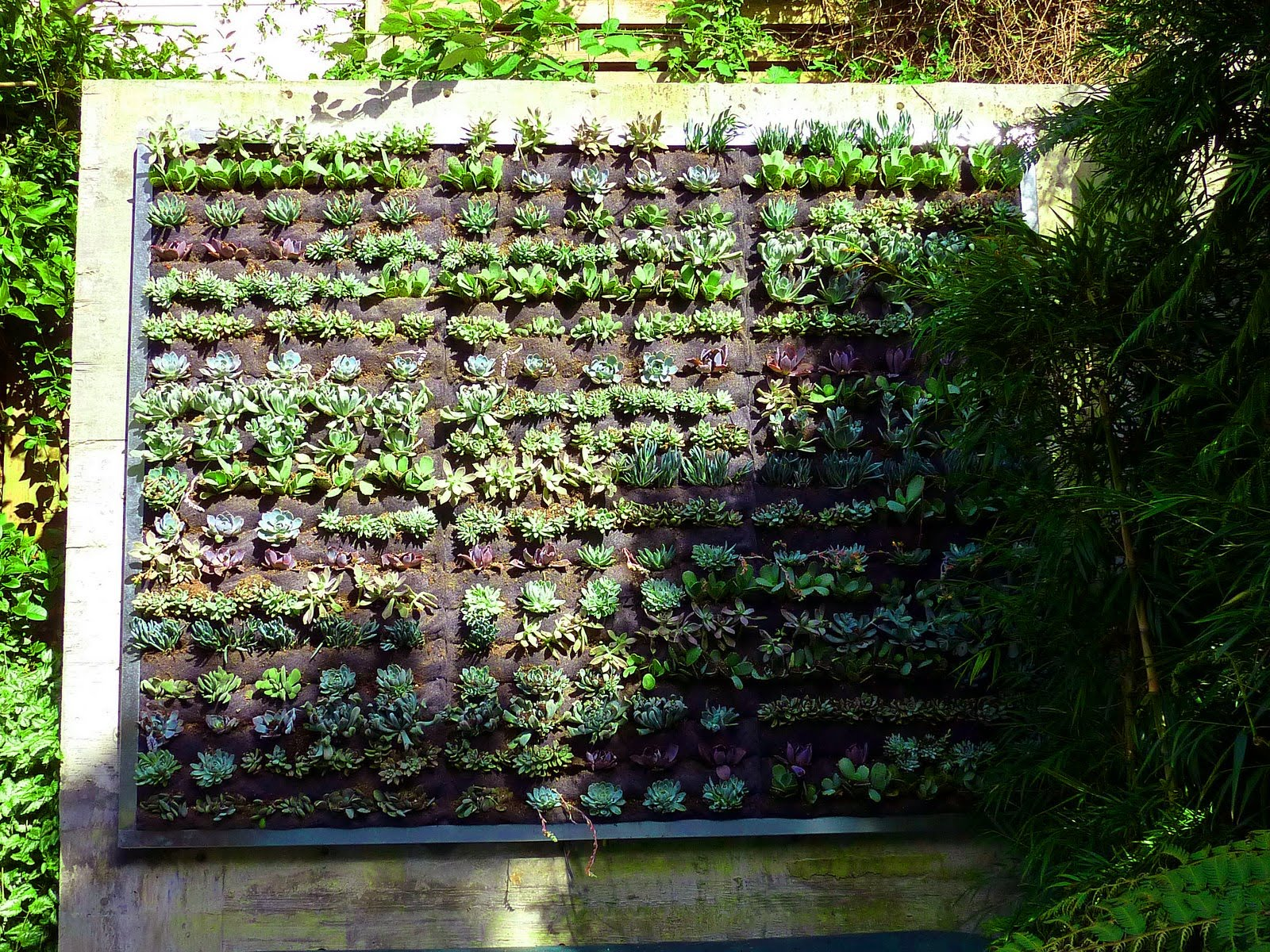 Plants on walls vertical garden systems june 2010 for Vertical garden wall systems