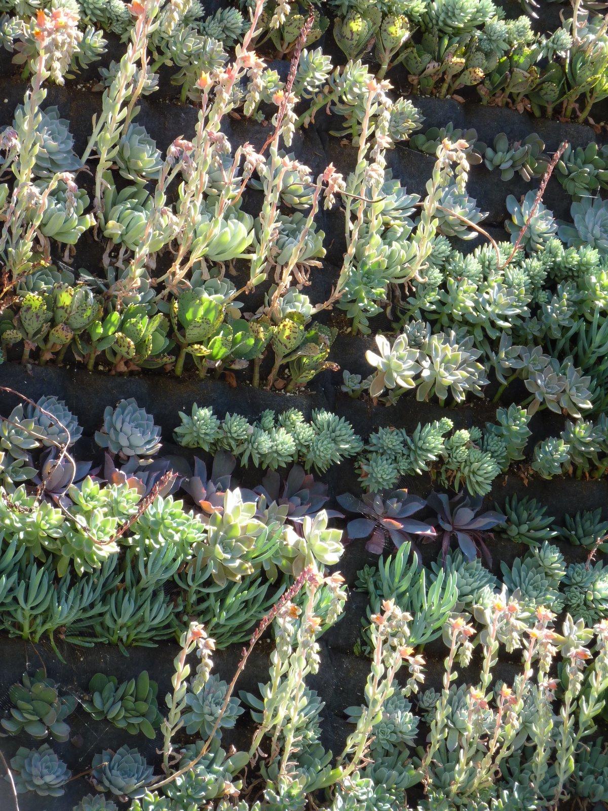 Plants On Walls vertical garden systems 3x3 Mini Pocket