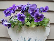 My Spring Flowers!