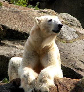 kussen polar bear