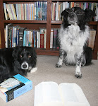 The Border Collies