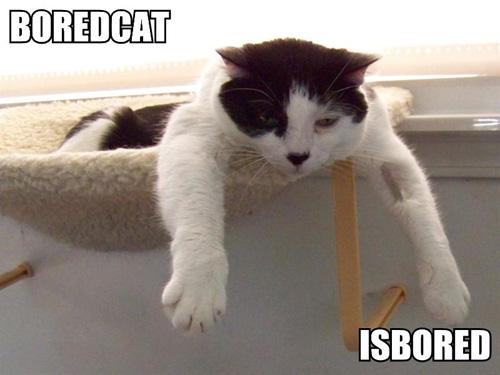 http://3.bp.blogspot.com/_uMZt3YQIbGc/TIMXeUSAyiI/AAAAAAAAASU/BdGQ0UAoidw/s1600/boredcat-isbored.jpg