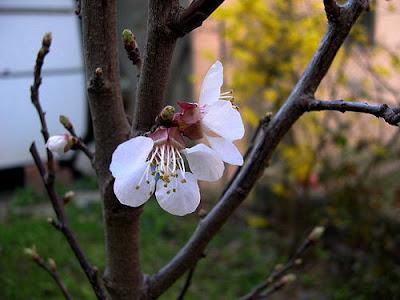 foto primo  fiore primaverile