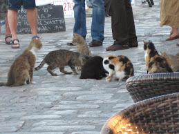 Katteselskap