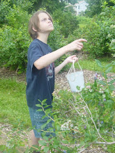 Jason blueberry picking