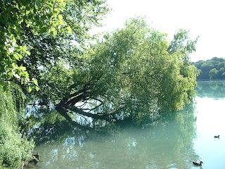 arbre couché dans l'eau