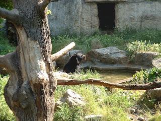 Ours qui prend son bain