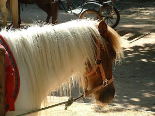 Poney en gros plans avec une crinière blanche-blonde