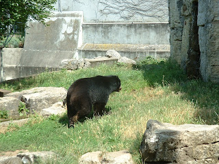L'ours s'apprête à rentrer dans sa tanière