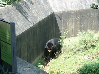 La ronde de l'ours