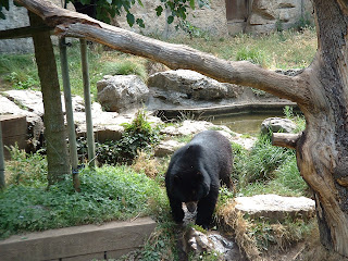 L'ours descend