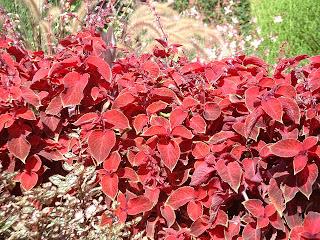 Fleurs de couleur rouge