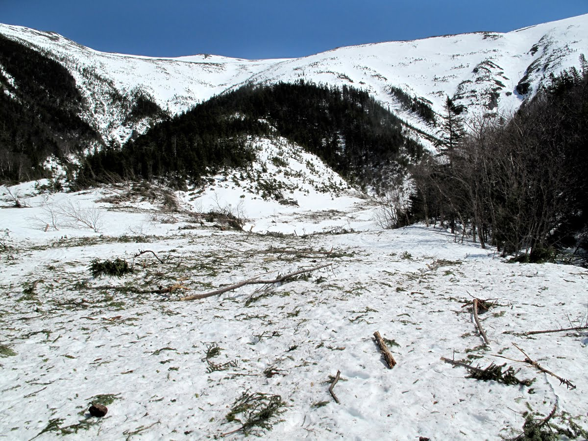 Avalanche Track  Exposed!