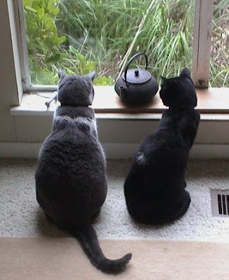 two cats enjoy the window