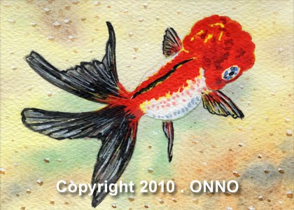 Lionhead Oranda Goldfish