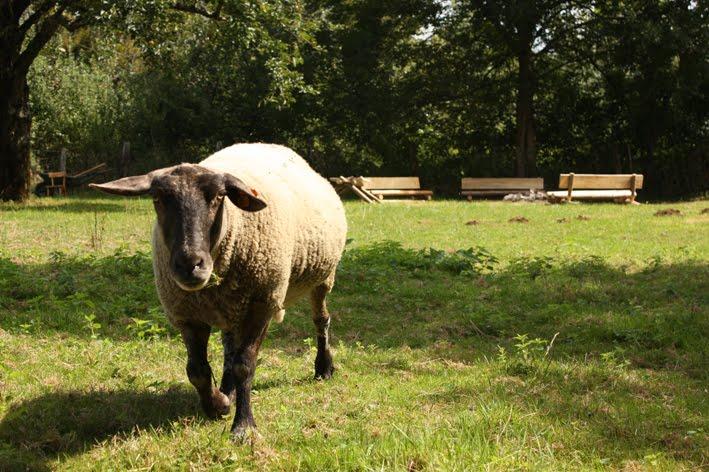 Carton bricolage d coration mobilier de jardin - Deco jardin mouton toulon ...