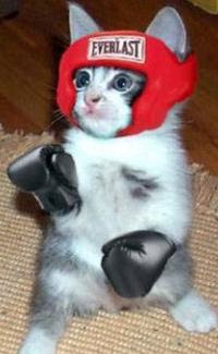 Toni Ryan Says...: What's Better Than a Catfight? Cats Boxing!