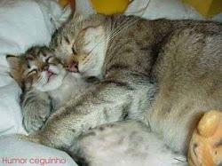 Amigos até no dormir ...