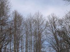 Skies of blue, peeking through