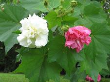 Lynette's flowers