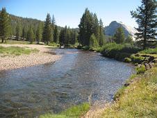 Tuolumne River thru the Meadow.
