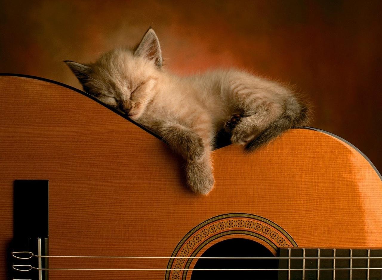 http://3.bp.blogspot.com/_uSL4gfJtXNY/TGqqhi-8R2I/AAAAAAAAAII/gl_4Csx0egI/s1600/cute-cat-wallpaper.jpg