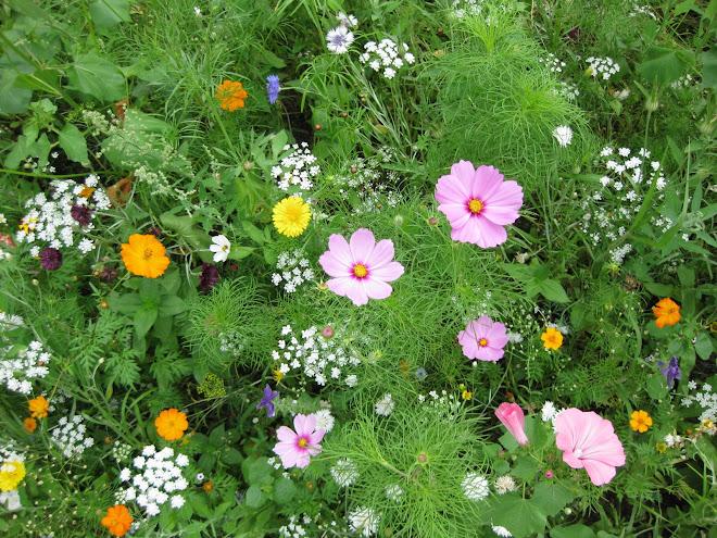 parterre de fleurs à Chelles
